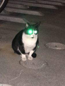 光る猫の画像